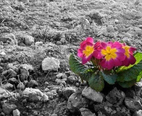 تخریب خاک باعث تنش اجتماعی می شود/ نقش عوامل طبیعی و انسانی در بیابانی شدن ایران