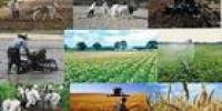 کمیسیون کشاورزی عدم اجرای قانون خرید تضمینی فرآورده ها کشاورزی را پیگیری می کند