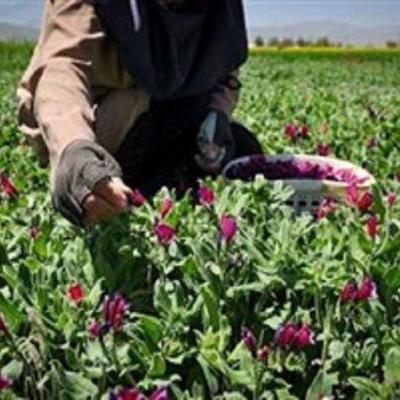 اشتغالزایی در استانهای زاگرس نشین با فرآوری محصولات بلوط