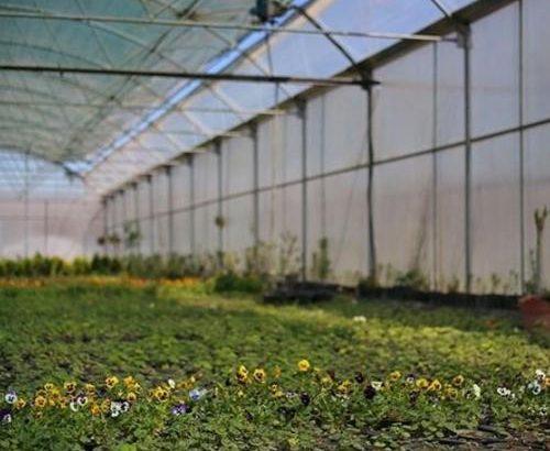 ۱۰ هزار از اراضی قم به گلخانه تبدیل میشود