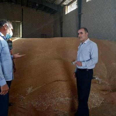 ۷۰ هزار تُن گندم مازاد بر نیاز کشاورزان لرستانی خریداری شد