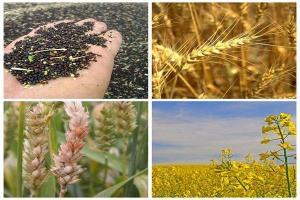 سیاست خرید تضمینی محصولات کشاورزی نیاز به بازنگری دارد