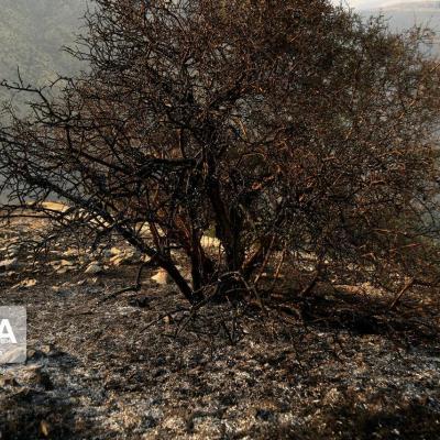 آتش سوزی منطقه دهرود دشتستان مهار شد
