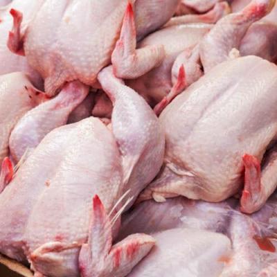 عرضه نکردن مرغ مشمول ۷۰ درصد جریمه دارد