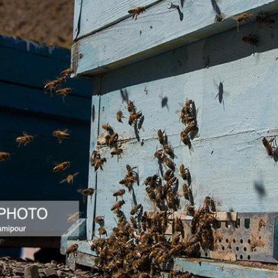 پژوهشکده زنبورعسل حلقه واصلهای بین اتحادیه زنبوداران و متخصصین علمی است