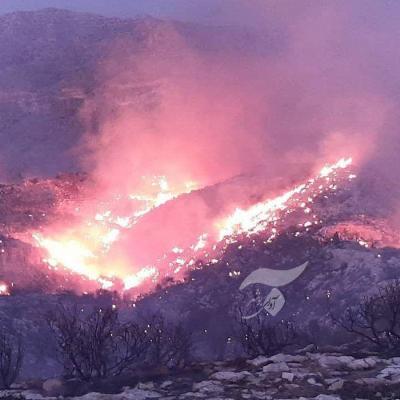آتش سوزی در کوههای جم کنترل شده است