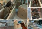 فرمانده مرزبانی استان بوشهر از کشف محموله قاچاق پرندگان شکاری در خطر انقراض شامل ۲۲ بهله پرنده شکاری در عسلویه شهرستان کنگان خبر داد.